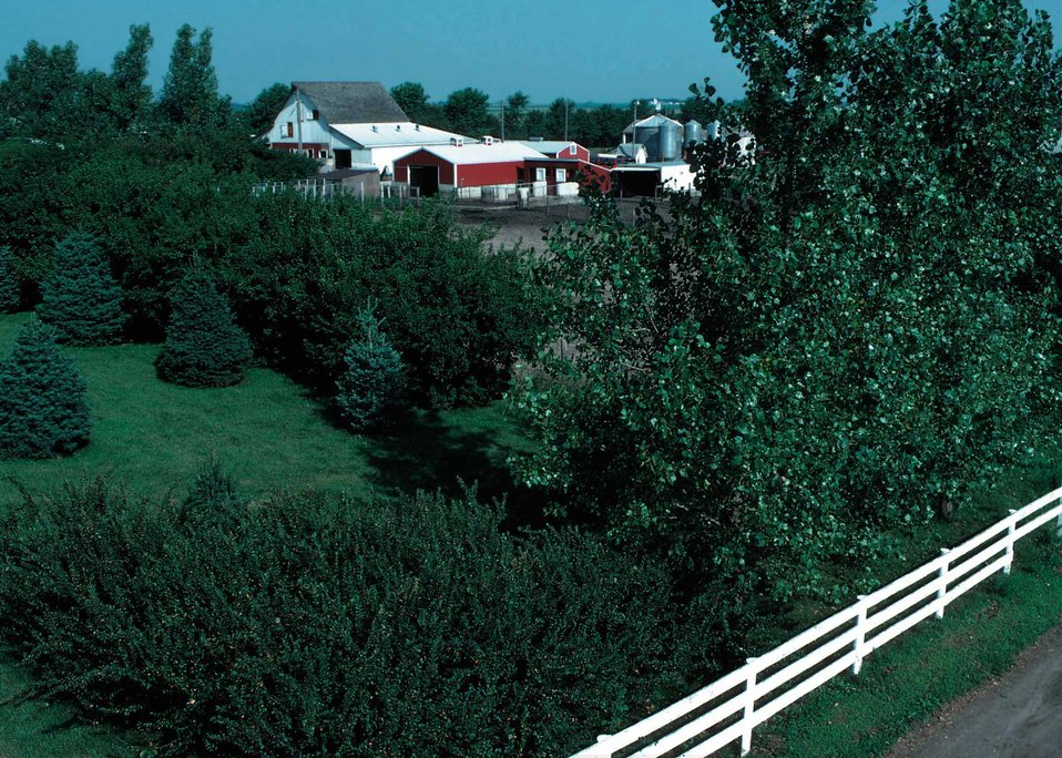 Multi-row farmstead windbreak in Pocahontas County, Iowa, includes shrubs, conifers, and deciduous trees.