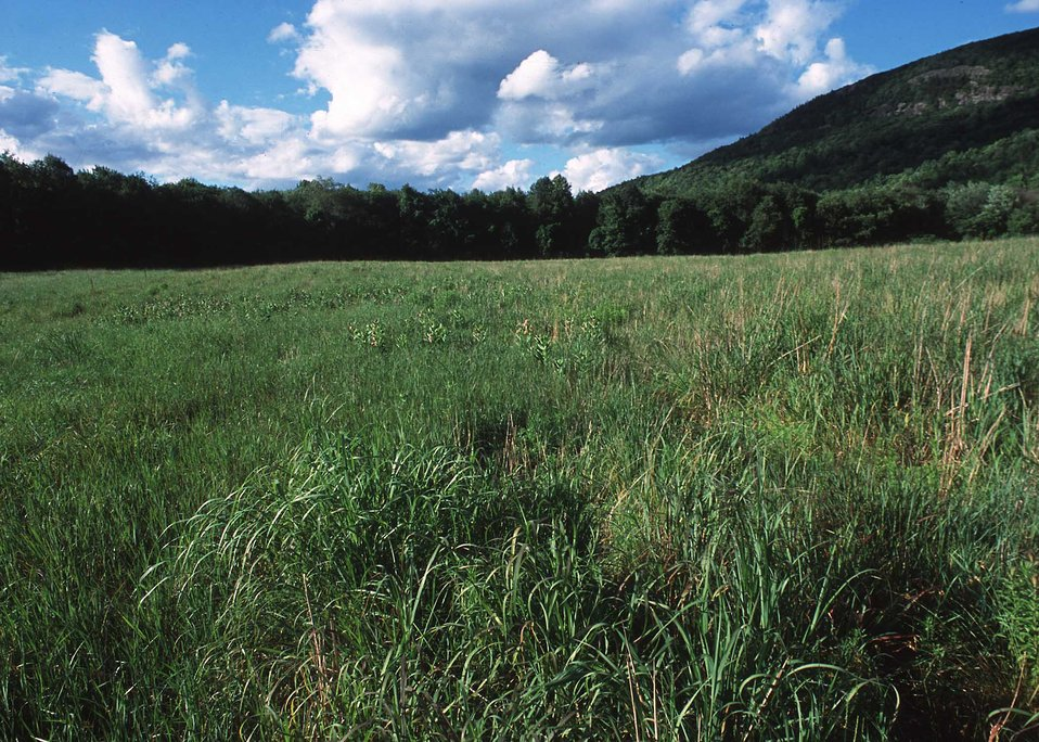 A landscape with grass and hills