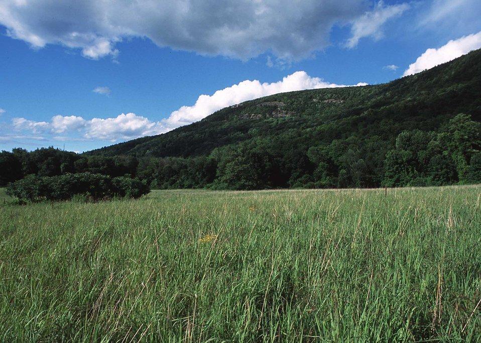 Warm season grassland habitat restoration project in Lichfield County.