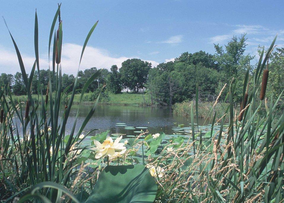 Water-loving plants on the edge of a pond in Van Buren County, Iowa.