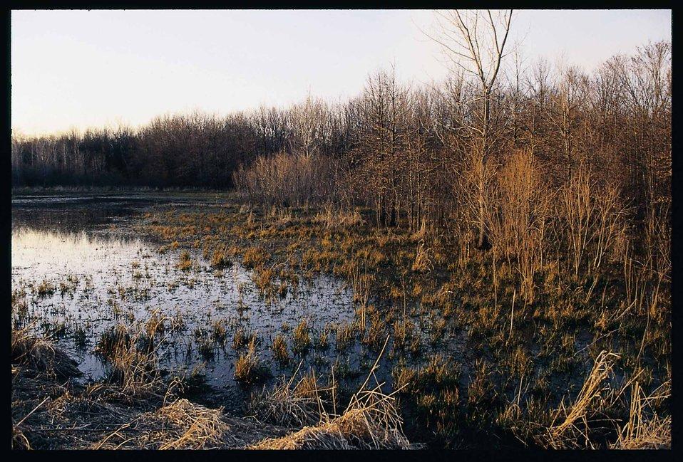 Habitat for ducks and geese on a restored wetland in Van Buren County, Iowa.
