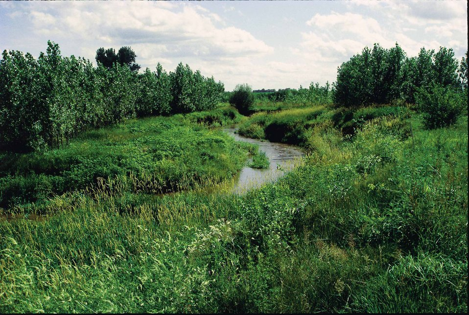Riparian buffer along Bear Creek, in Story County, Iowa. The buffer was established for about four years at the time of photo in 1997. Bear