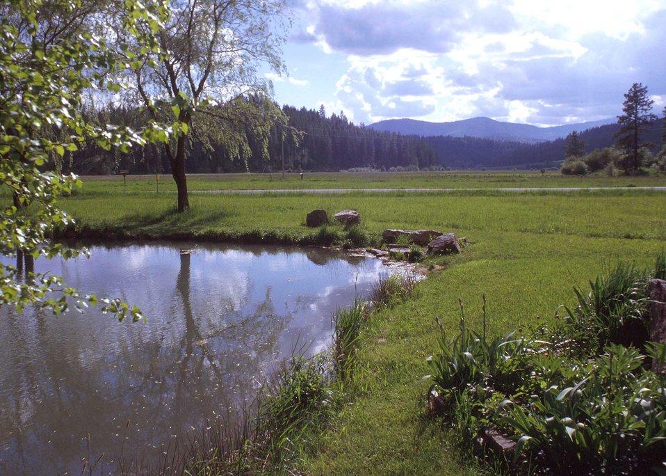 Public Domain Picture Farm Pond Landscape Id