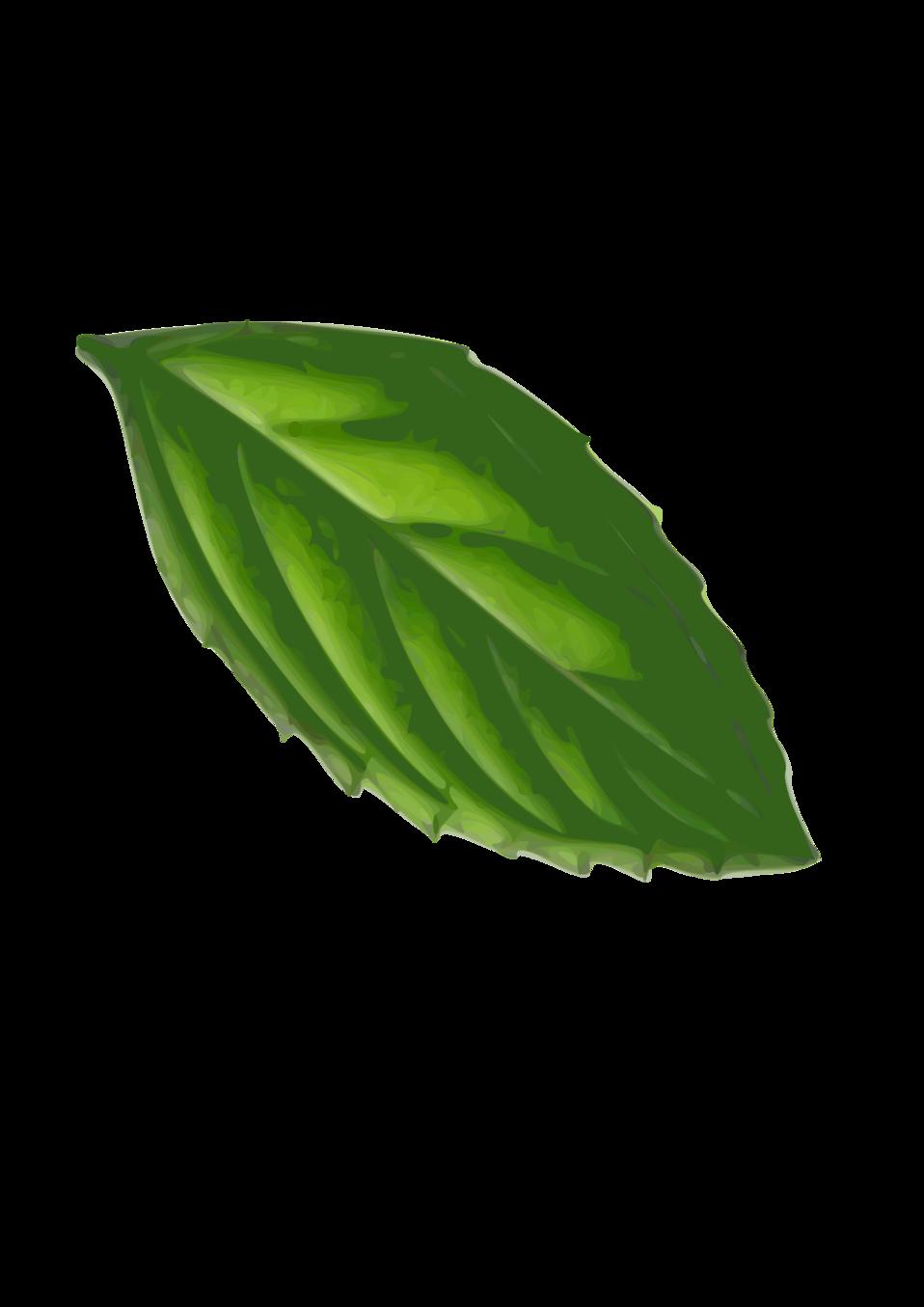 Illustration of a green leaf