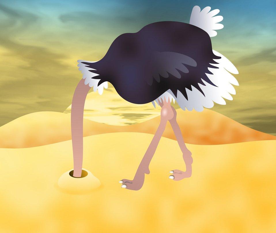 Ostrich clip art