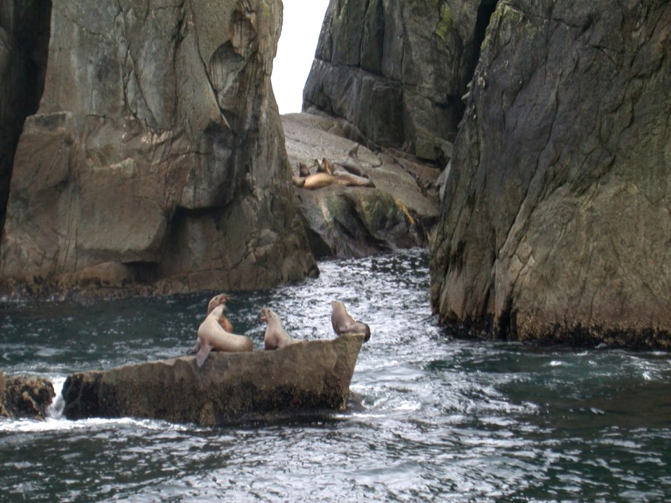 Sea Lions at the Chiswell Islands National Wildlife Refuge