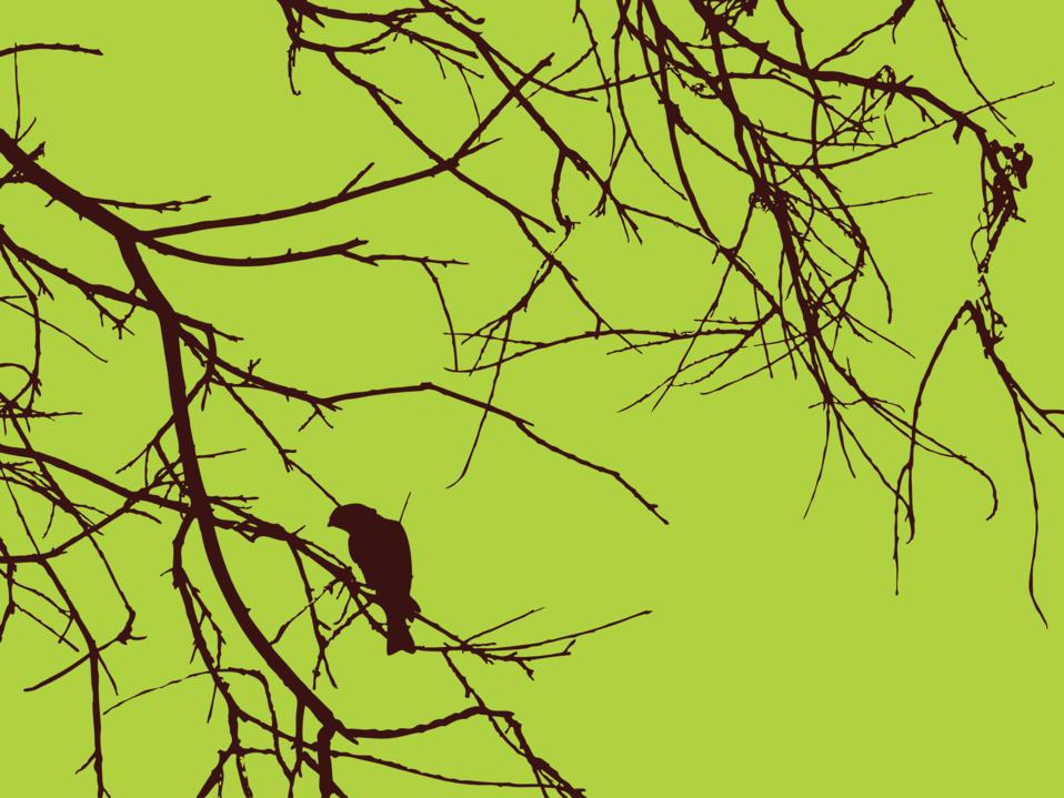 Bird Branches
