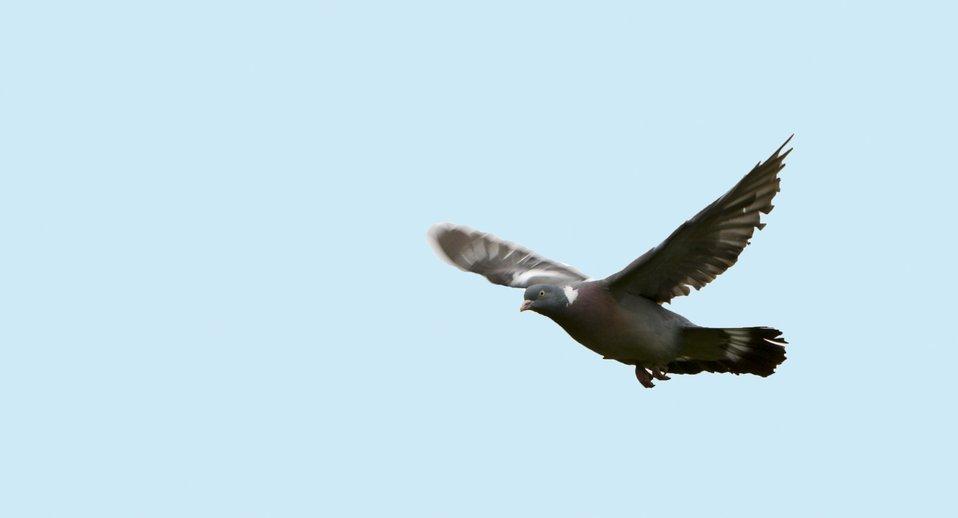 Bird flight blue sky