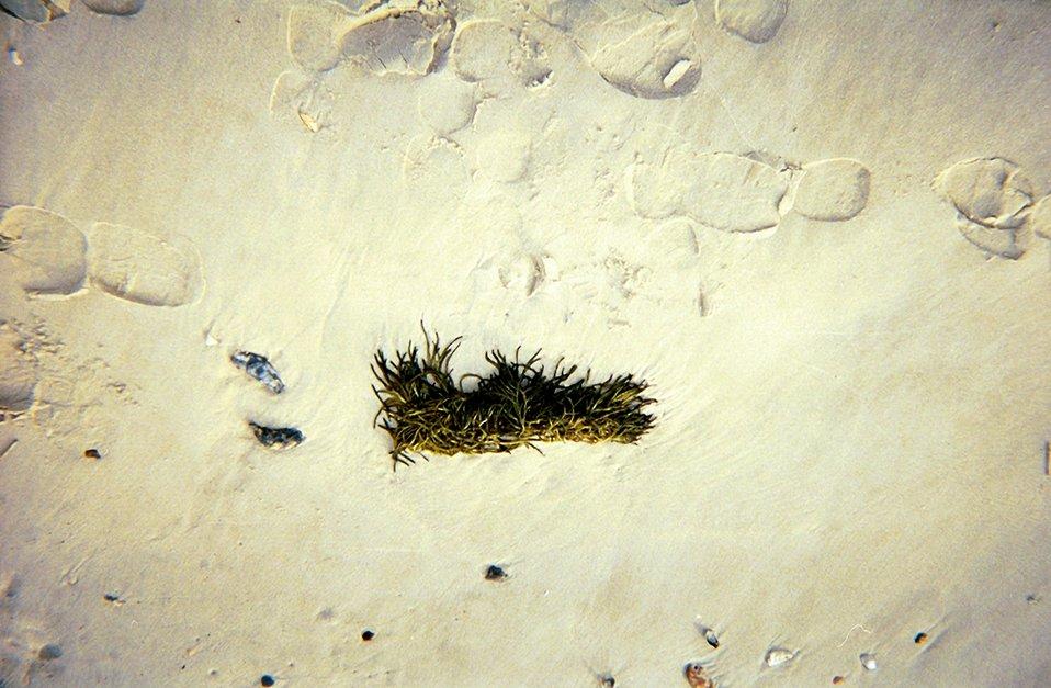 Algae cast upon the shore.