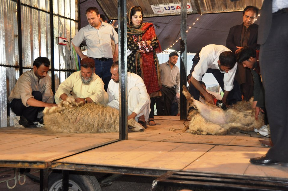 Photo 1-A demonstration in a USAID-sponsored mobile shearing shed