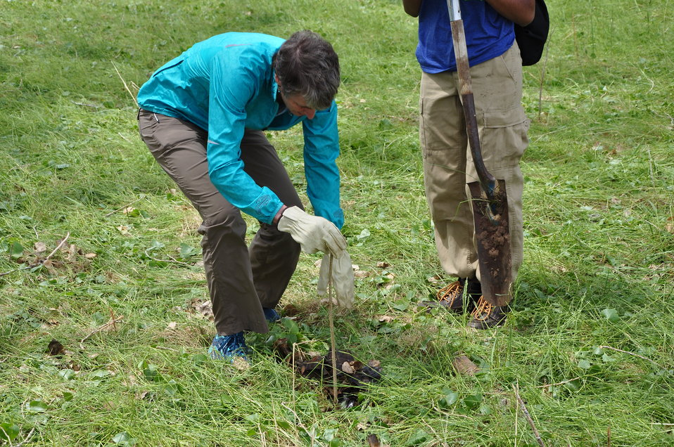 Secretary Jewell Planting a Cottonwood Tree