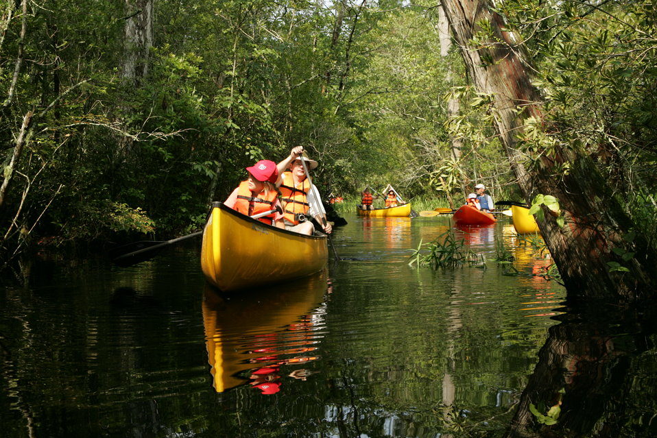 Paddling the canals of Alligator River National Wildlife Refuge offers many possibilities. You might see a black bear getting a drink along the water's edge. Or, you might have a river otter swim under your canoe. You might even see a resident alligator.