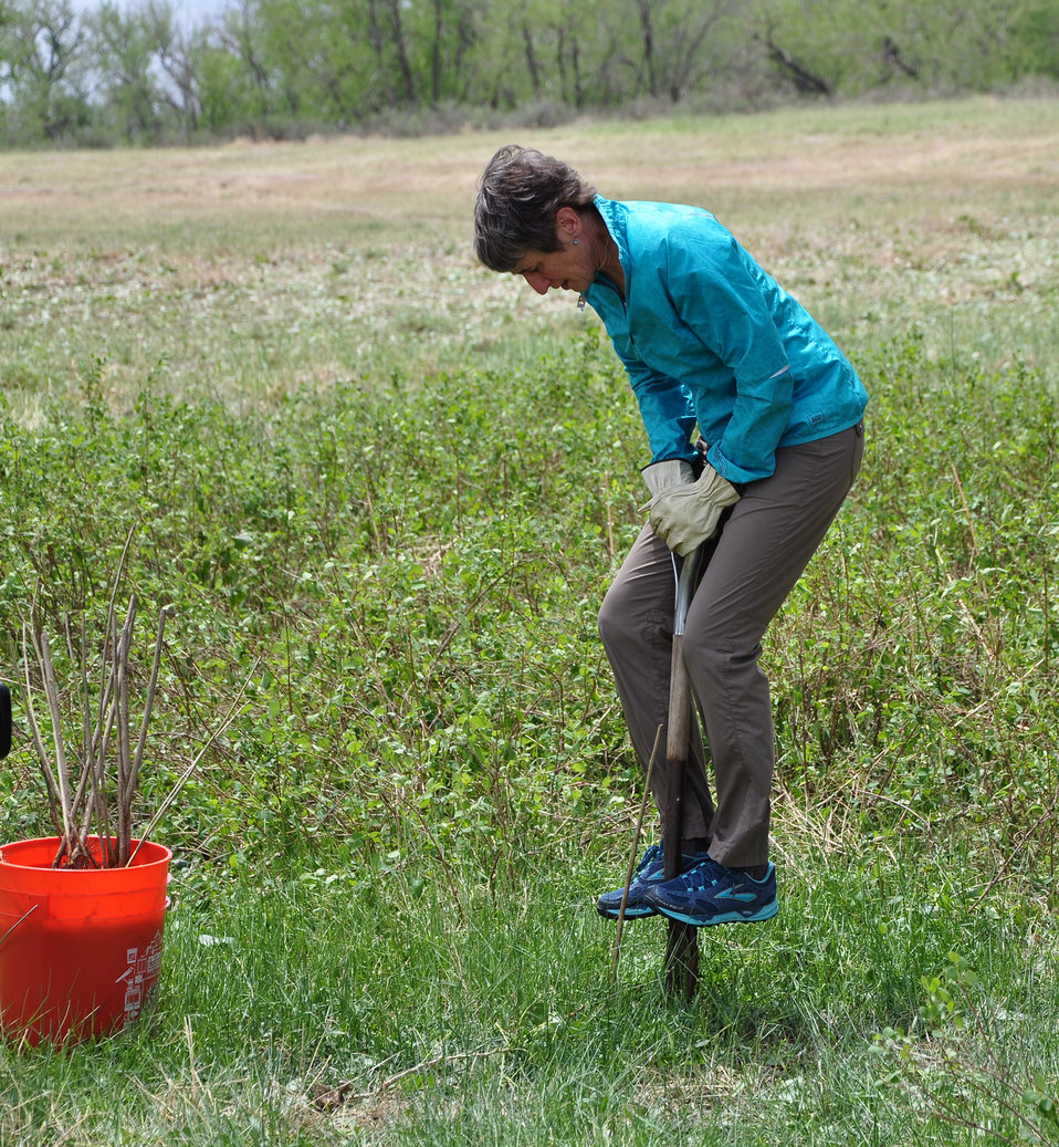 Secretary Jewell Digging a Hole for a Cottonwood Tree