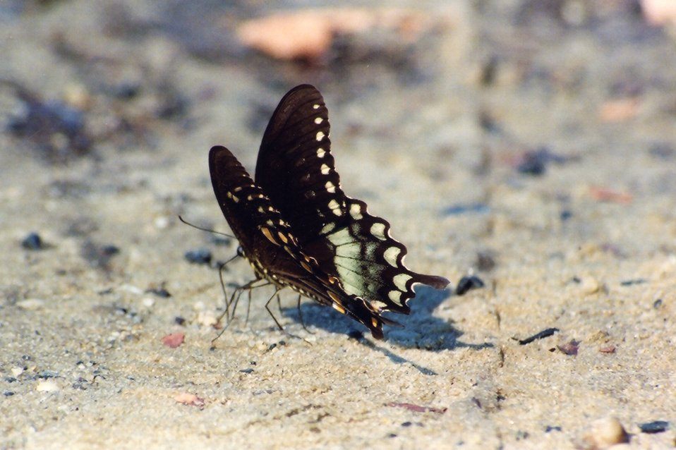 Butterfly on the beach.