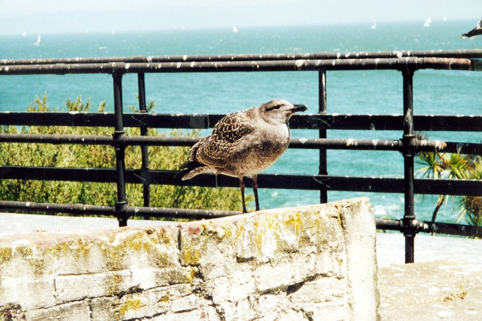 A jailbird at Alcatraz Island.