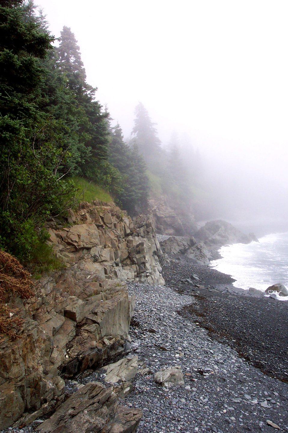 Cobble beach, rocky cliffs, and fog-shrouded evergreens at West Quoddy Head.