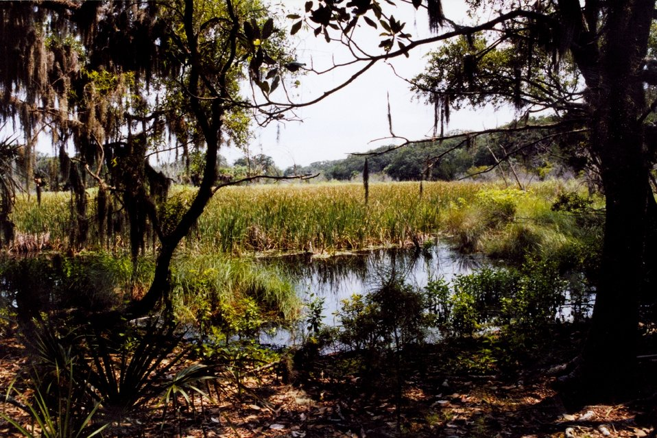 Tidal wetlands with oaks and Spanish moss