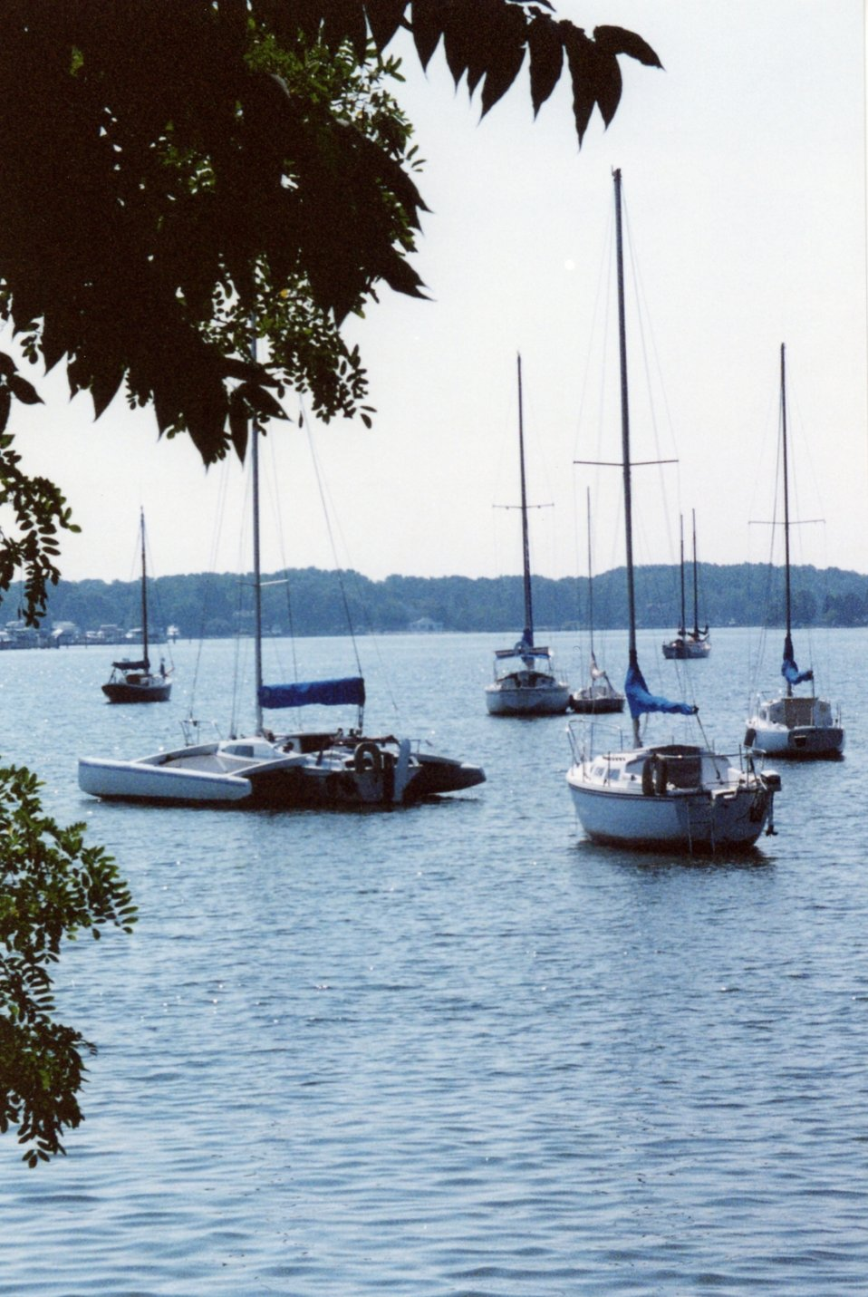 Sailboats moored in the West River.