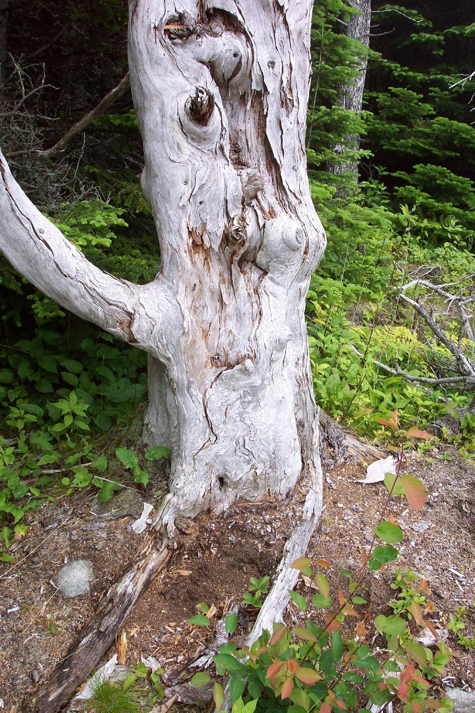 Patterns in a weather-beaten tree trunk.