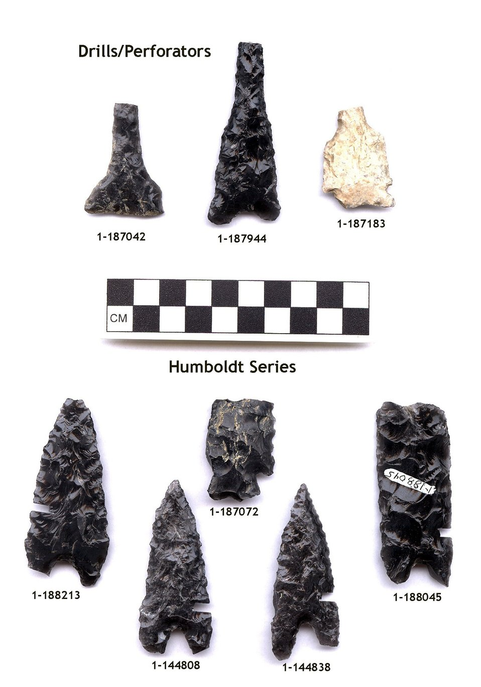 Arrowheads and dart points