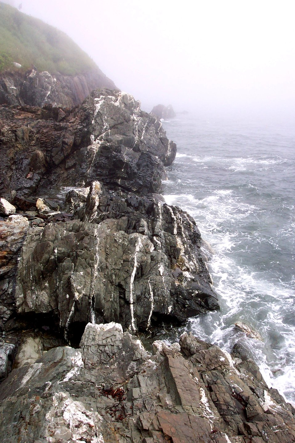 Quartz-veined metamorphic rocks below West Quoddy Head.