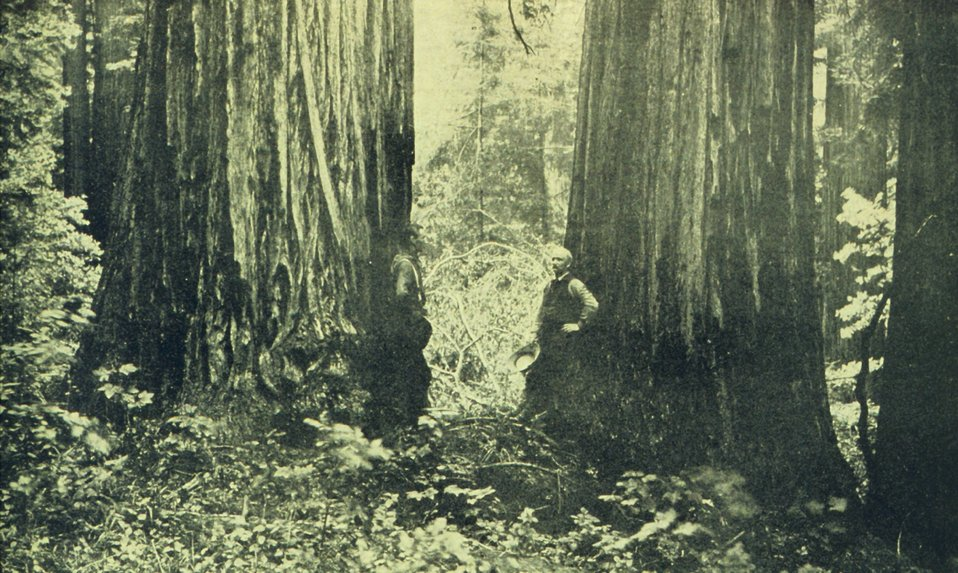 Typical timber scene in Sempervirens Park in Santa Cruz. In: 'The City of Santa Cruz and VicinityCalifornia.' Published by The Santa Cruz  Board of Trade.  1905.
