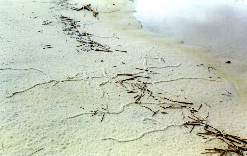Pencil-sized tunnels caused by some type of burrowing animal caused a  series of hieroglyphic appearing designs on the beach.