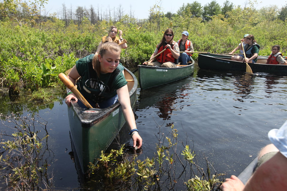 Blanding's turtle release May 2011