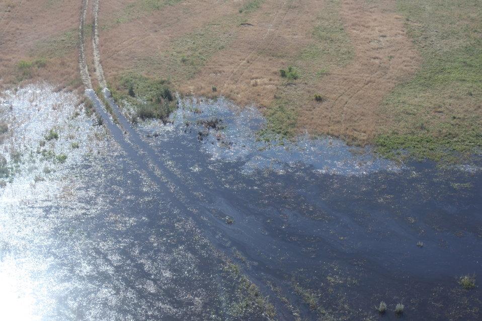 Aerial Wildlife Survey