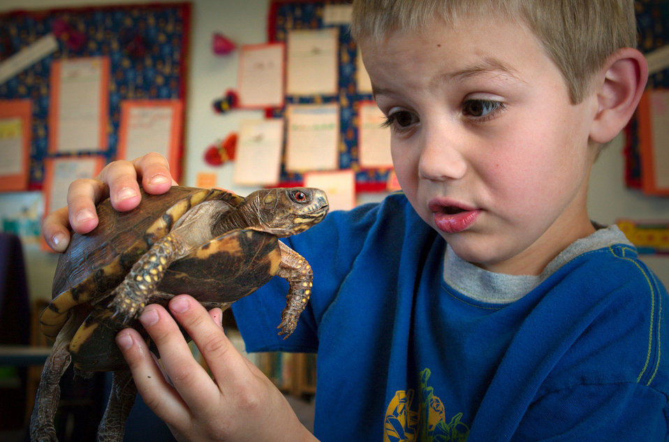 This 2005 photograph depicted a young boy holding a box turtle, portraying a look of wonderment mixed with curiosity, as the turtle looks on