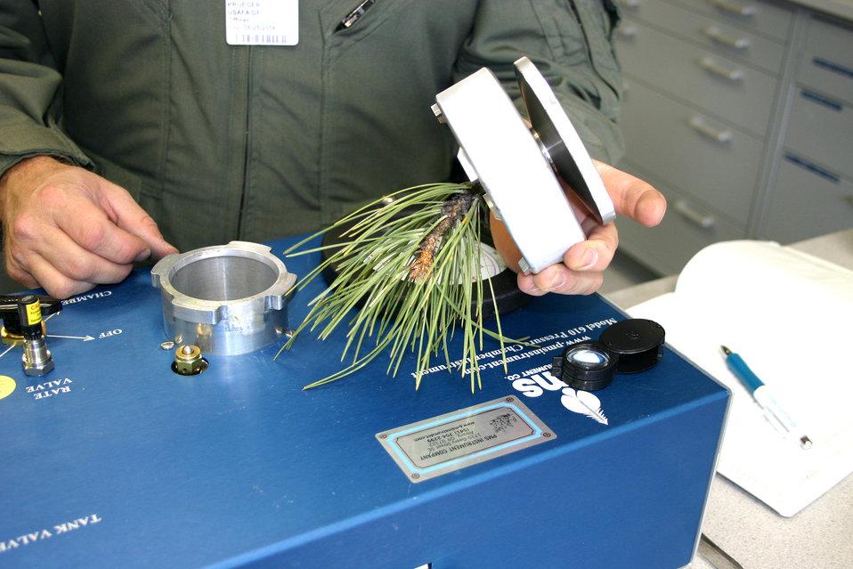 UAVs hunt tree disease
