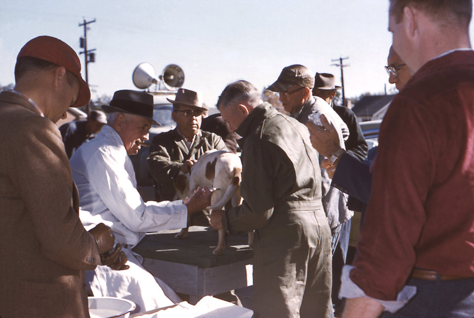 This 1958 photograph shows a veterinarian vaccinating a dog with the help of co-workers.