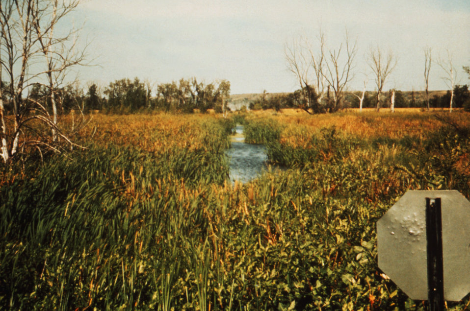 This 1976 photograph shows a drainage ditch (Cntr) surrounded by cattails at Lewis and Clark Lake in Nebraska.