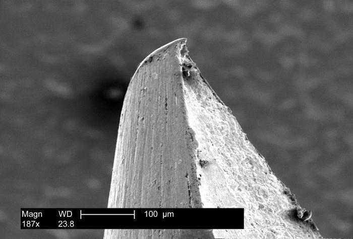 This scanning electron micrograph (SEM) reveals the roughened surface at the tip of one of the prongs of a 'bifurcated' smallpox vaccination