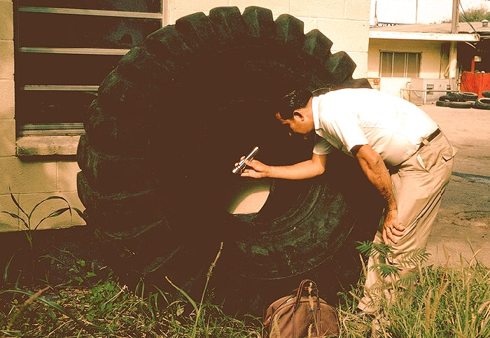 Huge tire, Aedes aegypti mosquito breeding site, McAllen, Texas.
