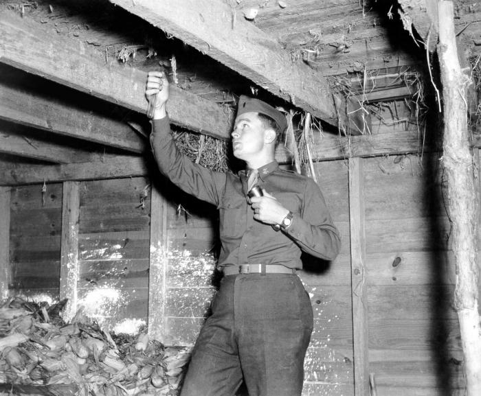 This photograph shows an inspector collecting mosquitoes in chloroform tubes for vector identification.