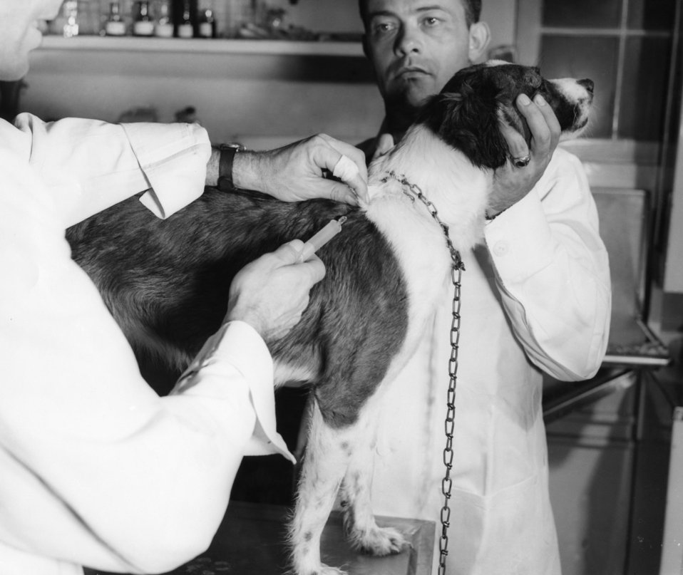 Here, two Centers for Disease Control (CDC) veterinarians were shown administering a rabies vaccination to a dog in an Atlanta, Georgia vete