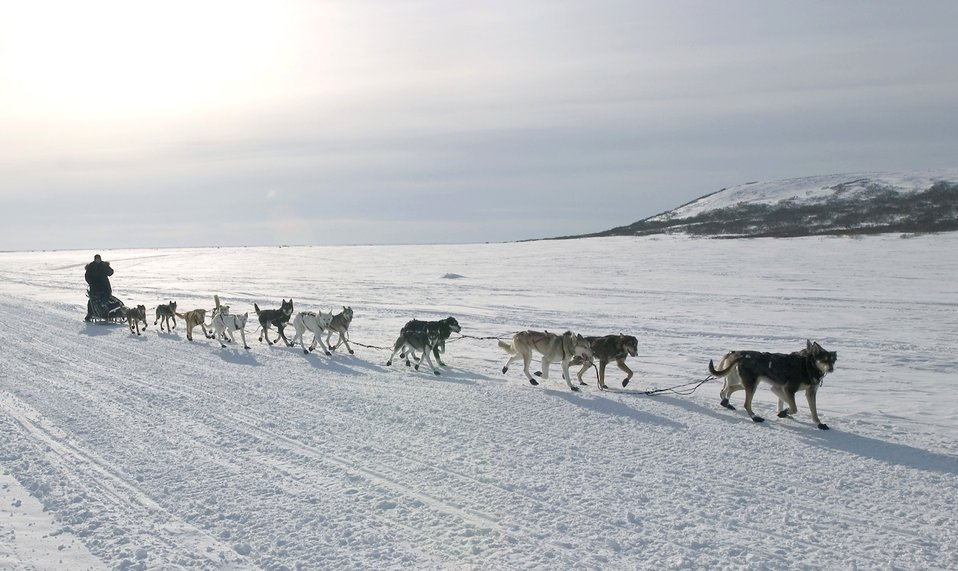 ... Domain Picture: Air Force doctor finishes Iditarod with flourish
