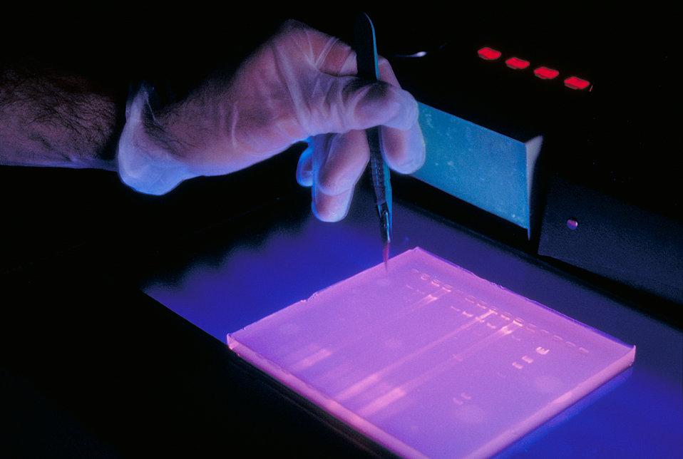 DNA study in CDC laboratory.