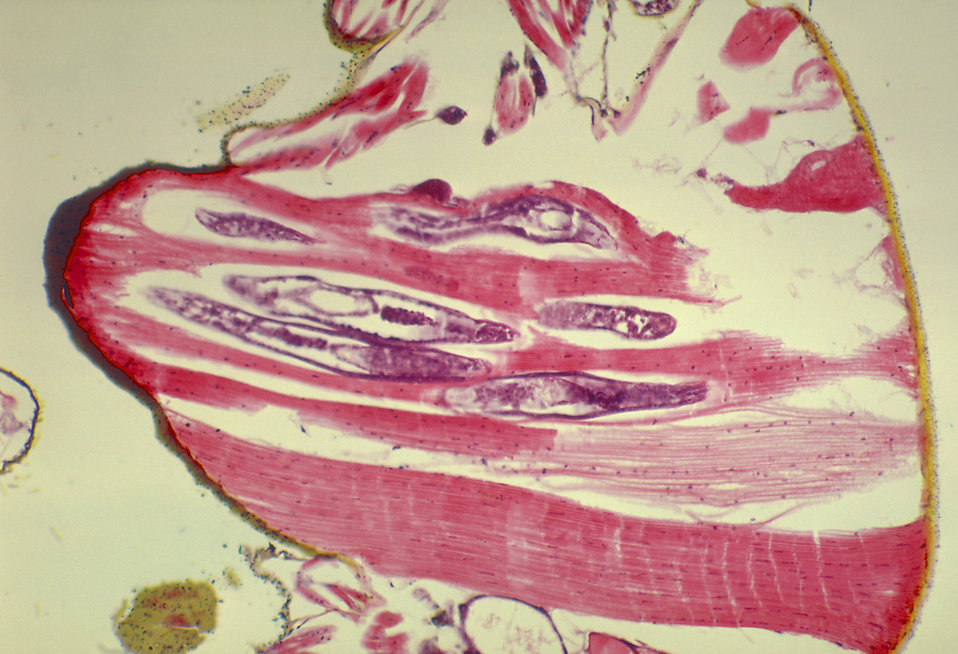 histology for pathologists pdf free download