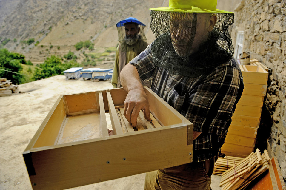 Bringing bees in to produce honey and pollinate Panjshir