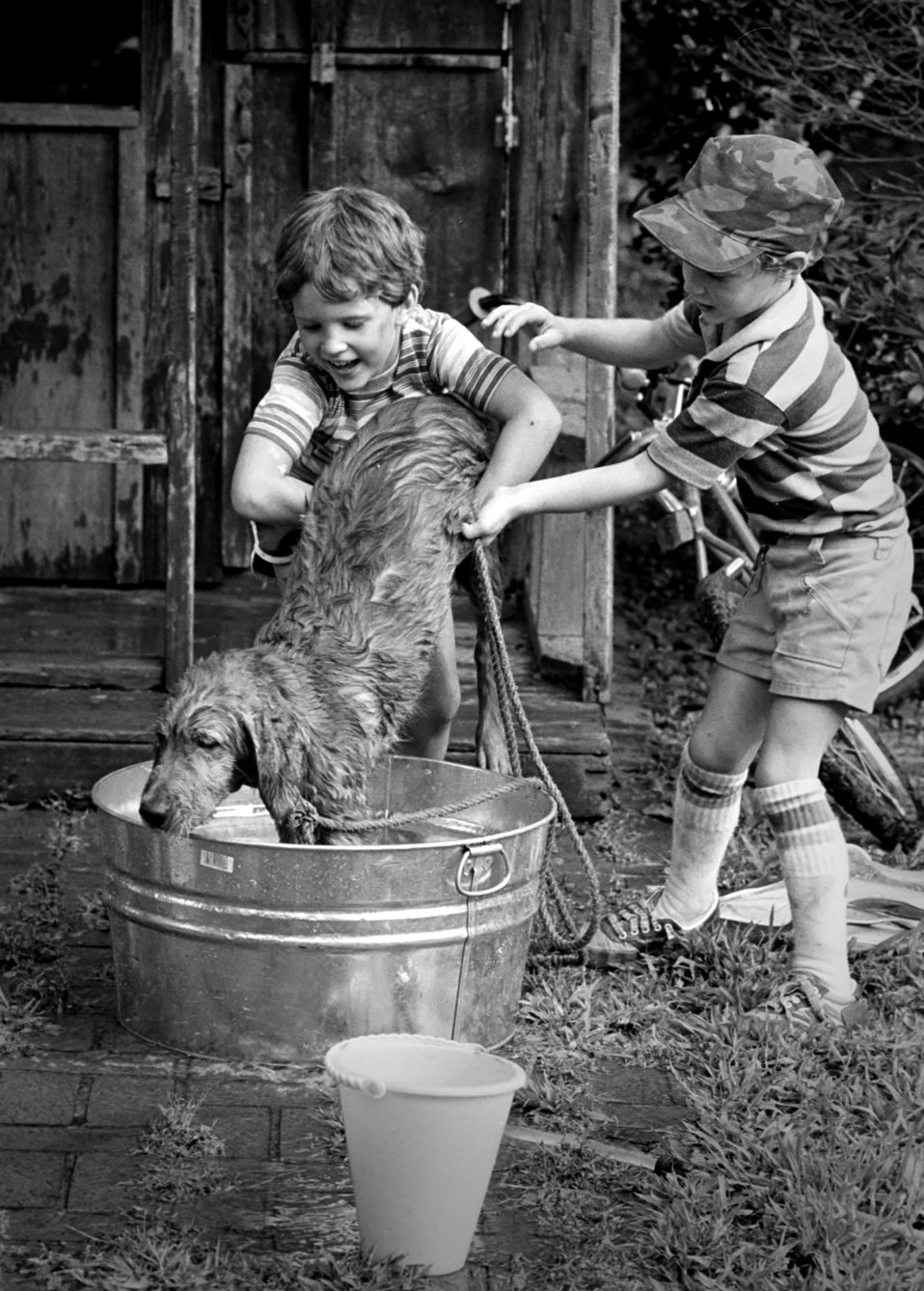 This photograph depicts unknown mixed breed of dog who was in the process of receiving a bath from two small children. Note the docile, rela
