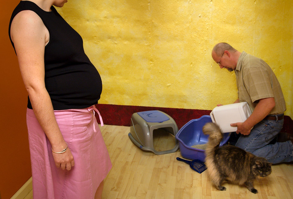 In this 2005 photograph, a pregnant woman was looking on while her husband was in the process of changing the kitty litter, in order to avoi