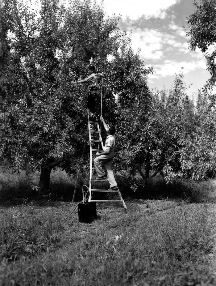 This 1947 historical photograph was provided by the Center for Disease Control's (CDC), National Institute for Occupational Safety and Healt