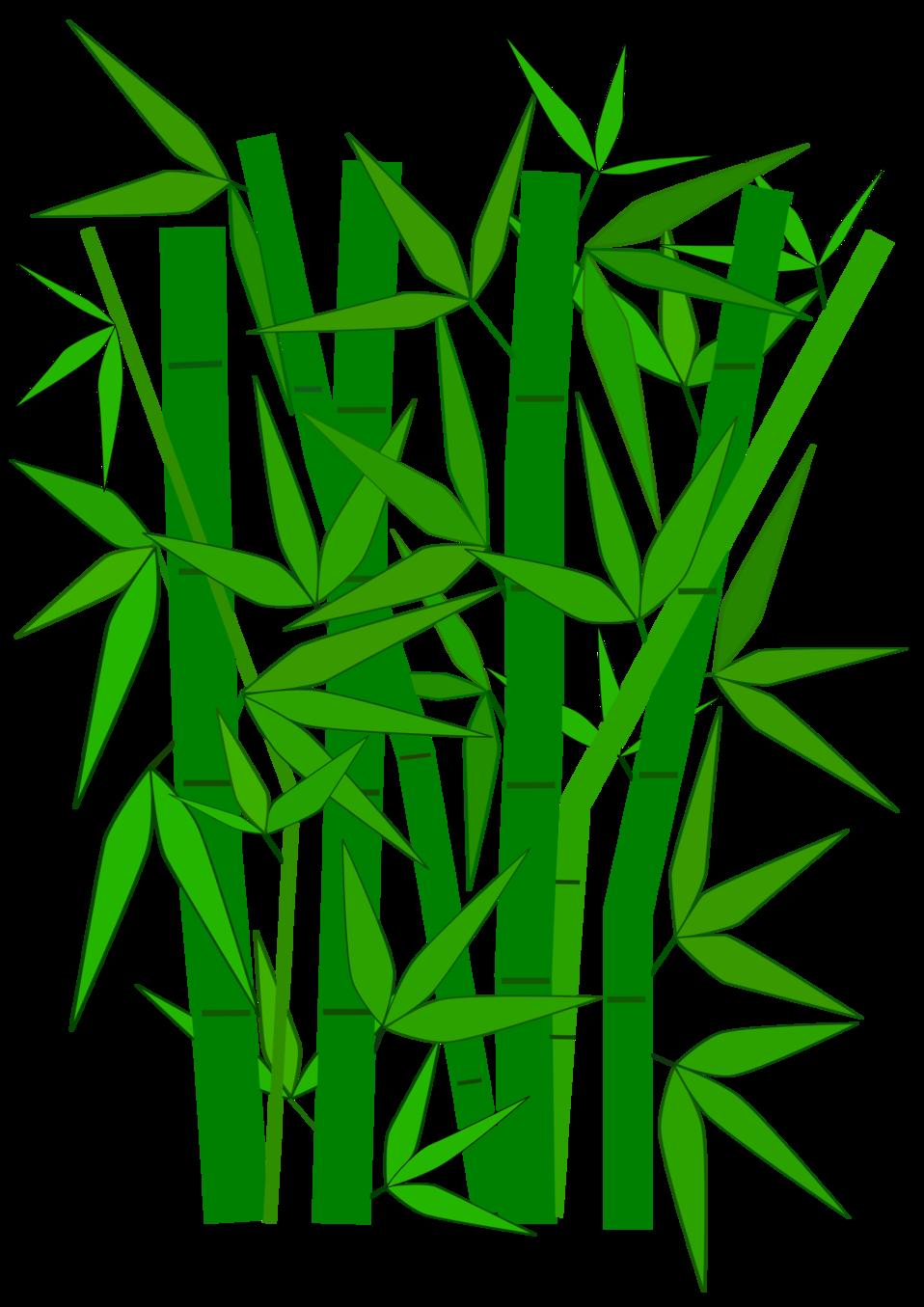 Bamboo graphic