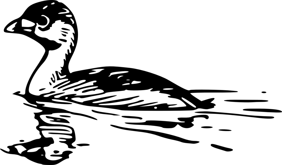 Pied-billed Grebe