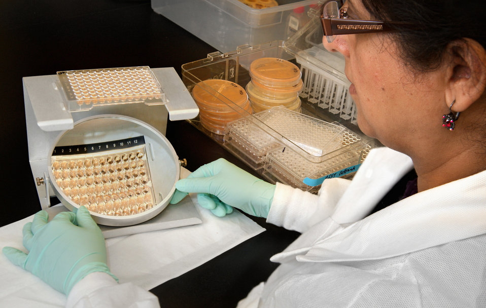 This image shows Centers for Disease Control and Prevention (CDC) scientist Naureen Iqbal reading the results of an antifungal drug suscepti