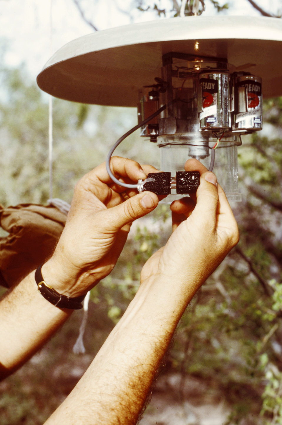 This technician is setting up a CDC light trap in order to collect mosquitoes in the field.