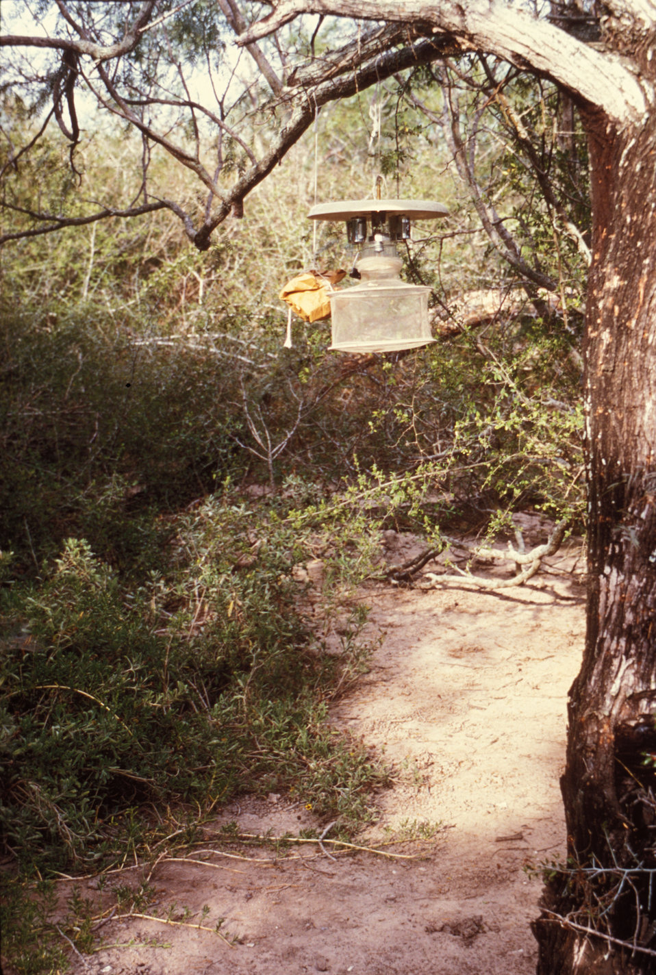 This 1974 photograph shows a CDC light trap used to collect mosquitoes in the field.