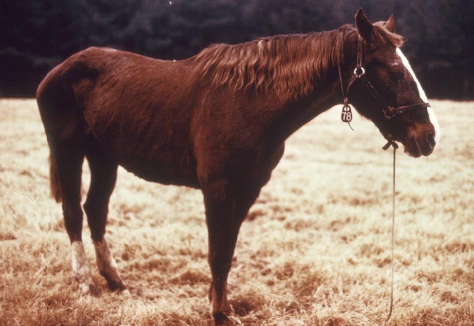 This horse was displaying symptoms of the arboviral disease Venezuelan equine encephalitis (VEE).
